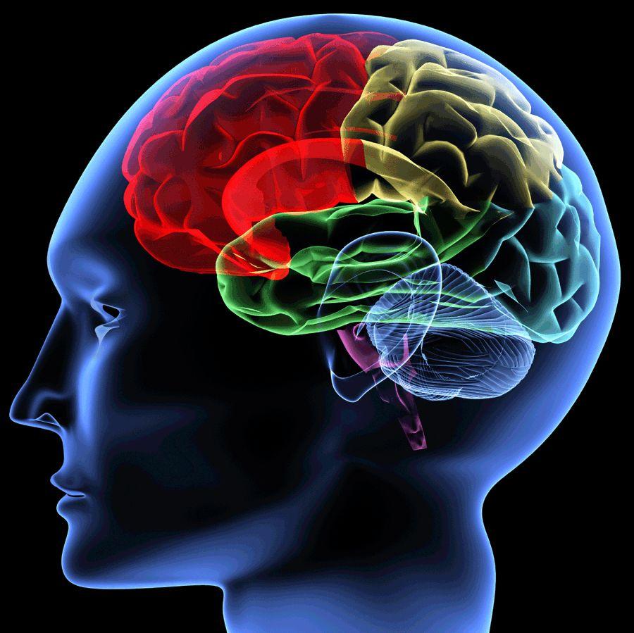 esquema com partes do cérebro coloridas de forma diferente